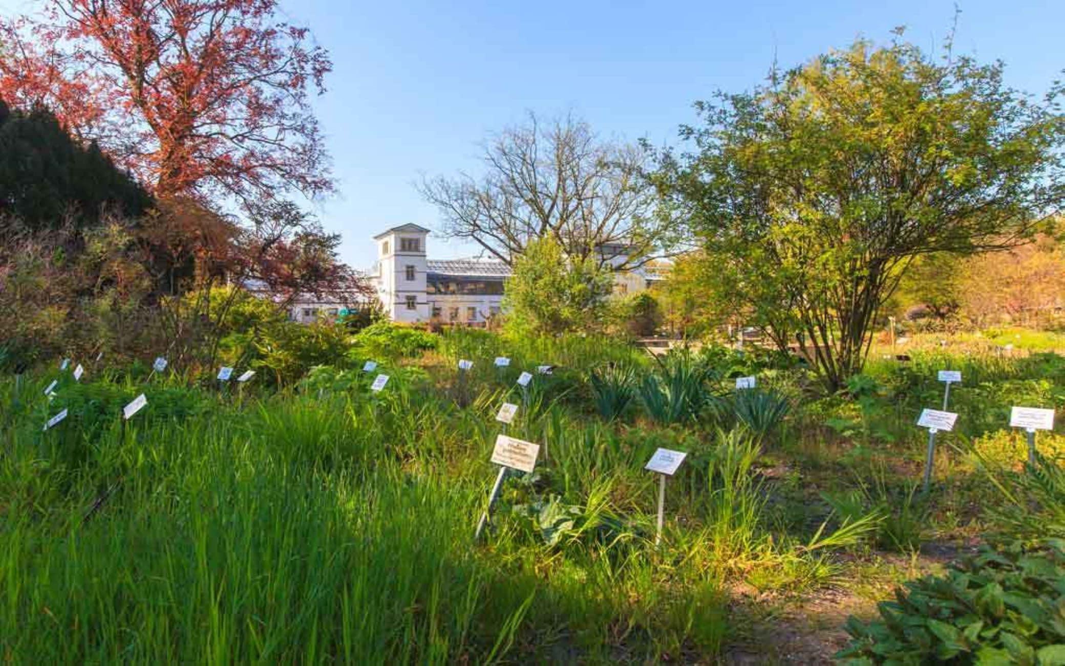 Lipsia, il più antico giardino botanico della Germania. Foto: Swen Reichhold
