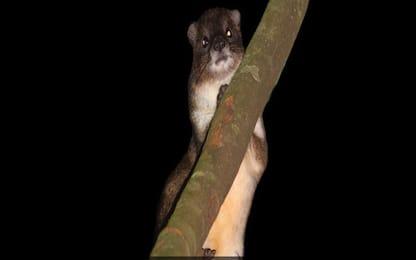 Kenya, scoperto un nuovo mammifero nelle foreste africane