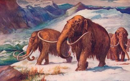 Scienza, 15 milioni di dollari per creare un ibrido elefante-mammut