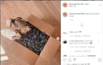 Animali, vip, Instagram