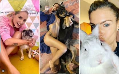 Gli animali dei vip, star della quarantena su Instagram. FOTO