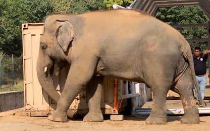 """Cher salva l'elefante Kaavan: """"E' un giorno bellissimo"""""""