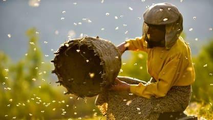 """""""Honeyland"""", il regno delle api in un film candidato agli Oscar 2020"""