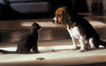 Covid, studi: cani e gatti possono essere contagiati dai padroni