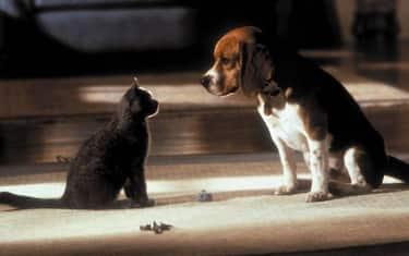 08-cani-e-gatti