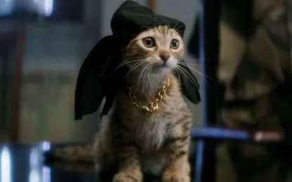 Festa del Gatto: ecco i film per gli amanti dei mici