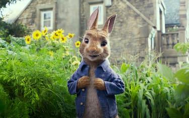 peter-rabbit-webphoto
