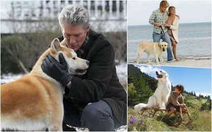 """Giornata mondiale del cane: i film sul """"miglior amico dell'uomo"""". FOTO"""