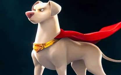 DC League of Super-Pets, il nuovo teaser del film animato. VIDEO