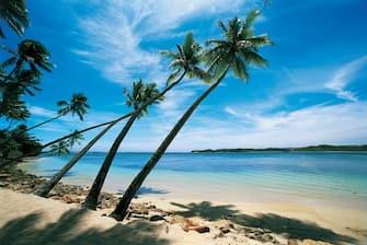 UNSPECIFIED - DECEMBER 29:  Palm trees leaning over the beach, Natadola Beach, Viti Levu, Fiji  (Photo by De Agostini via Getty Images)