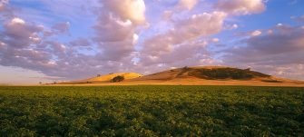 Potato field, Blampied, near Daylesford, Victoria, Australia. (Photo by Auscape/Universal Images Group via Getty Images)