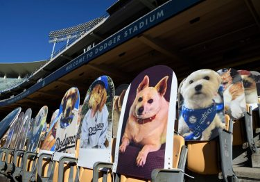 LOS ANGELES, CA - AUGUST 10: Cardboard cutouts of pets are placed in the stands during the game between the San Diego Padres and Los Angeles Dodgers at Dodger Stadium on August 10, 2020 in Los Angeles, California. Dodger fans, for $149, can now purchase a cutout for their pets. Proceeds from the sale of cutouts will benefit the Los Angeles Dodgers Foundation, the Dodgers' official charitable organization.  (Photo by Kevork Djansezian/Getty Images)