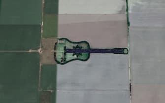 Il bosco a forma di chitarra in Argentina, visto da Google Earth