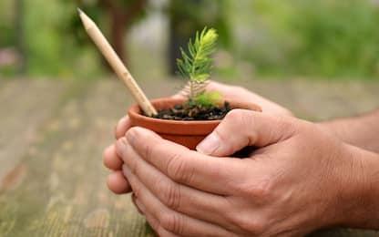 Sprout, spopola in Italia la matita che si trasforma in pianta