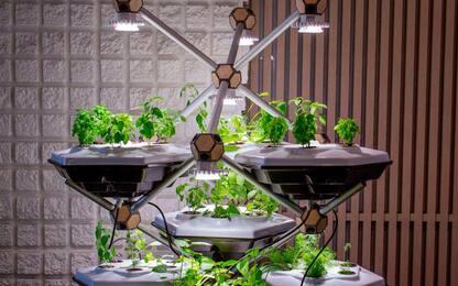 Living Farming Tree, l'orto verticale IoT completamente digitalizzato
