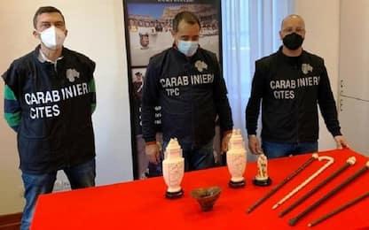 Torino, sequestrata coppa in corno di rinoceronte venduta all'asta