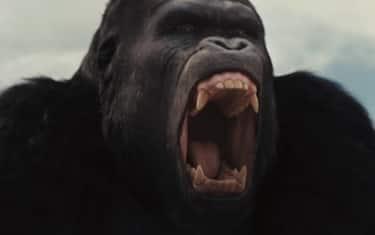 03_Gorilla_PrimatiPianetaDelleScimmie_Cinema