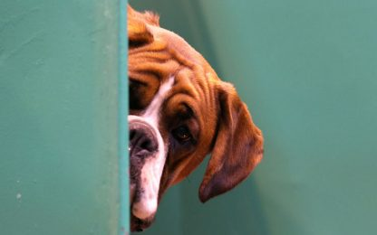 Uccide cane del compagno durante lite nel Catanese: denunciata
