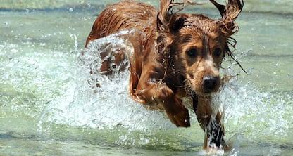 Anni dei cani, proposta una nuova formula per calcolarli