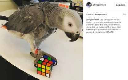 Pappagallo smarrito, l'sos di Mexes su Instagram