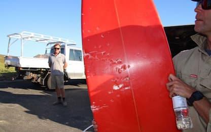 Panico in acqua: surfista attaccato da uno squalo