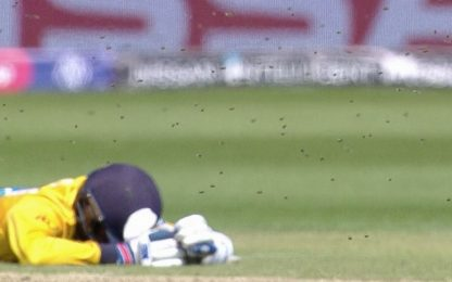 Invasione di api al Mondiale di cricket: IL VIDEO