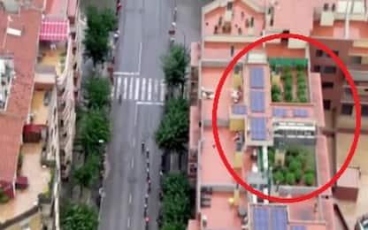 Vuelta, elicottero svela piantagione di marijuana