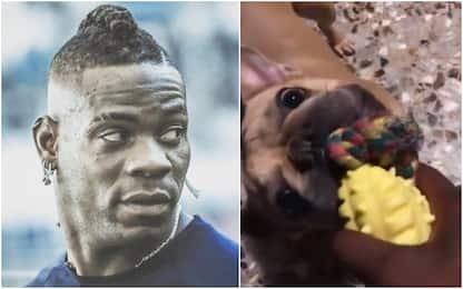 """Balo fa festa col cane: """"Tifi Brescia?"""". VIDEO"""