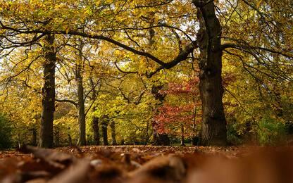 È la Giornata nazionale degli alberi: le iniziative in Italia