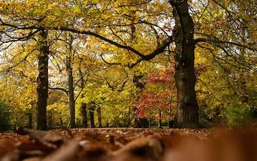 Getty_Images_-_festa_alberi
