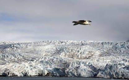Artico, il cambiamento climatico modifica le abitudini degli animali