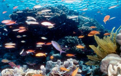 Barriere coralline ripopolate con i suoni di altoparlanti sottomarini