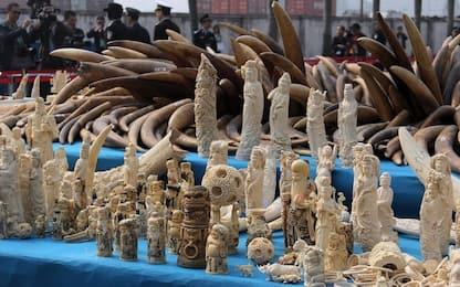Uk: stretta su commercio avorio, banditi anche oggetti di antiquariato