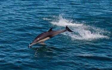 GettyImages-delfino