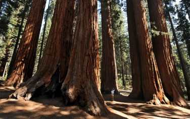 Getty_Images_Sequoia