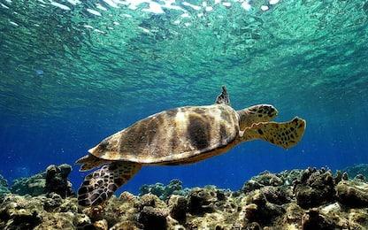 Napoli: apre il più grande centro per tartarughe del Mediterraneo