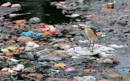 Quei milioni di tonnellate di plastica in mare, un rischio per tutti