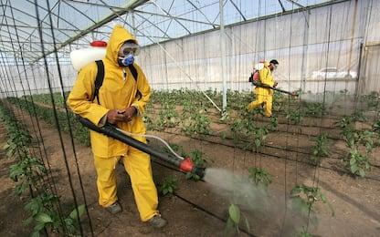 Legambiente: un terzo di frutta e verdura contaminato da pesticidi