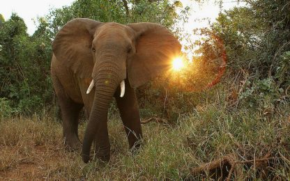 Maltrattamenti su elefanti: Cassazione condanna gestore circo
