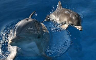 Getty_Images-delfini