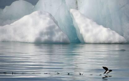 Era glaciale, uno studio svela come gli animali siano sopravvissuti