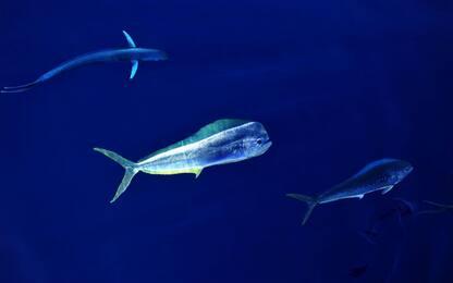 Fauna mar cinese meridionale