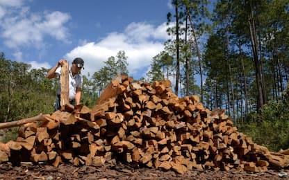Fao, dal legno il 40% di energia rinnovabile del mondo