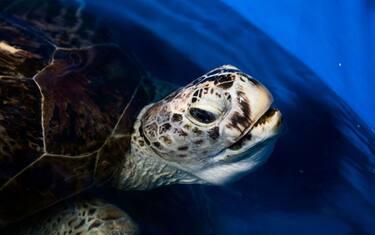 GettyImages-tartaruga