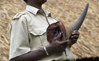 Sudafrica, via libera al commercio del corno di rinoceronte