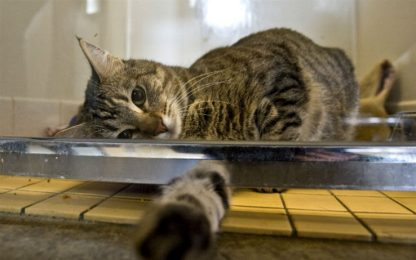 Vivere con un gatto può aiutare i pazienti cardiopatici a stare meglio