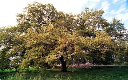 Gargano, tagliate 400 querce nel parco nazionale: 3 arresti