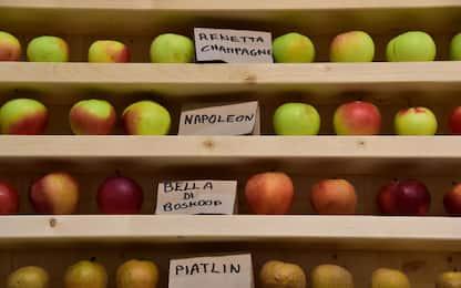 Colesterolo cattivo in calo con due mele al giorno