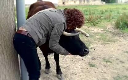 """L'appello di Change.org: """"Salvate la mucca Margherita"""""""