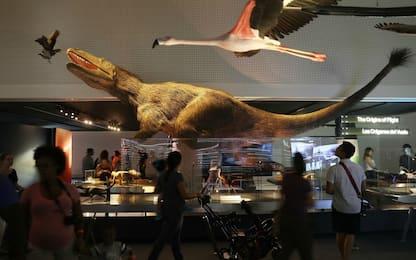 Nel tardo cretaceo, l'Alaska era l'autostrada dei dinosauri
